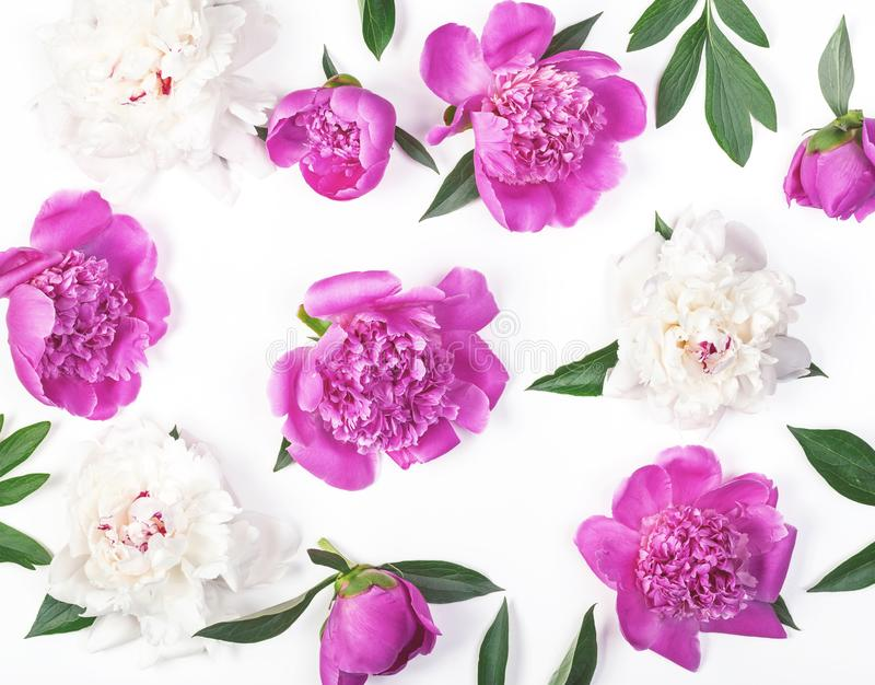 Floral pattern made of pink and white peony flowers and leaves isolated on white background. Flat lay. Top view stock photo