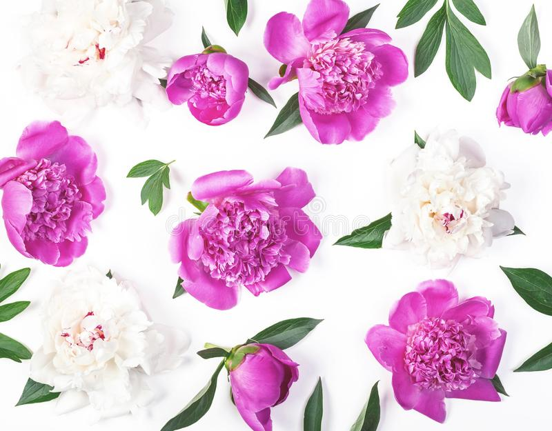 Floral pattern made of pink and white peony flowers and leaves isolated on white background. Flat lay. Top view royalty free stock image