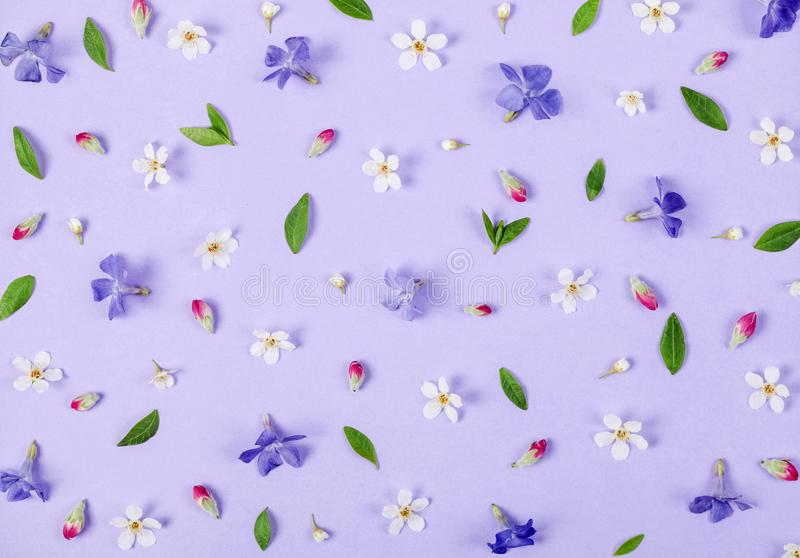 Floral pattern made of spring white and violet flowers, green leaves and pink buds on pastel lilac background. Flat lay royalty free stock images