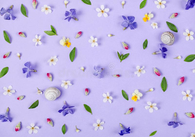 Floral pattern made of spring white and violet flowers, green leaves, pink buds and snail shells on pastel lilac background. Flat lay. Top view stock image