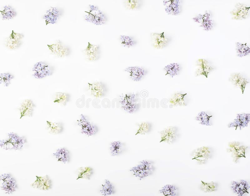 Floral pattern made of spring white and violet lilac flowers isolated on white background. Flat lay. Top view royalty free stock photo