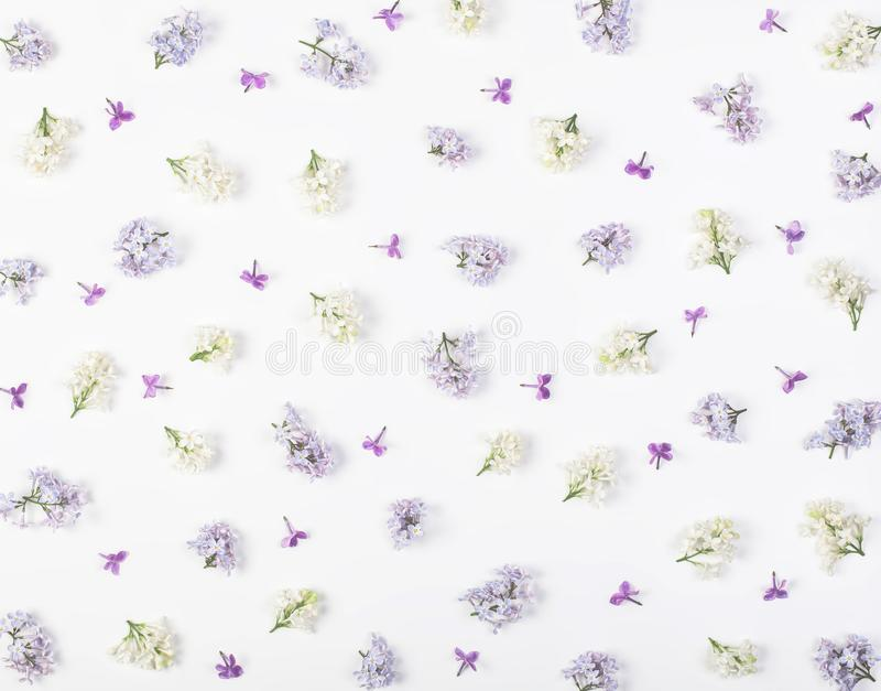 Floral pattern made of spring white and violet lilac flowers isolated on white background. Flat lay. stock images