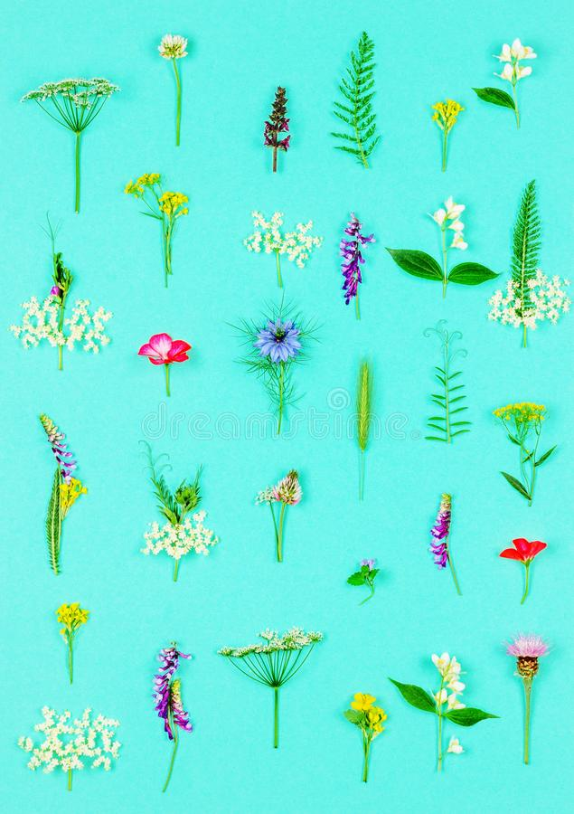 Floral pattern made of wild healing flowers and herbs stock photography