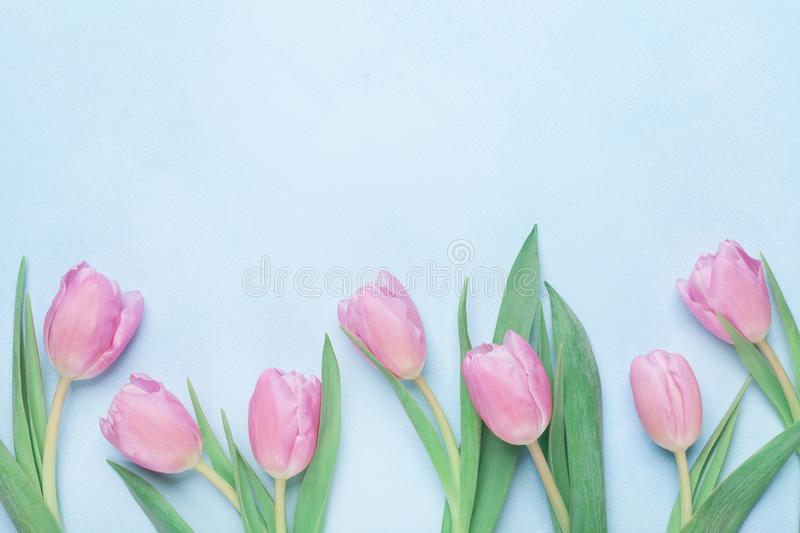 Floral pattern for March 8, International Womans or Mothers day. Beautiful spring tulip flowers. Top view. royalty free stock photo