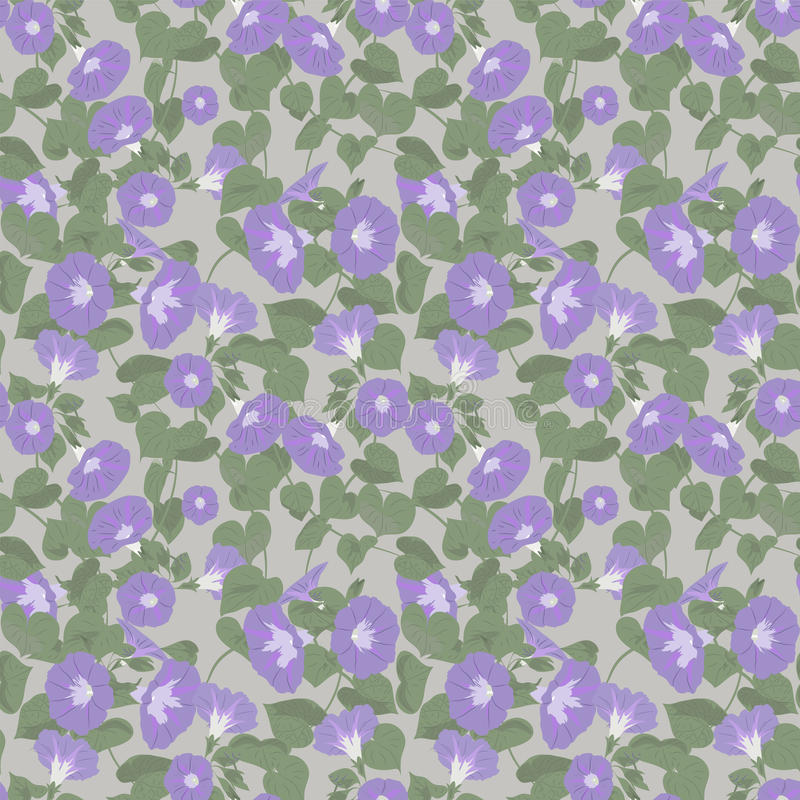 Floral pattern. With morning glory on grey background vector illustration