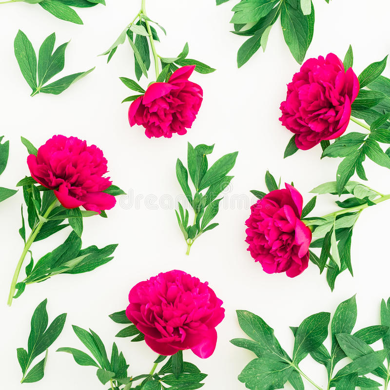 Floral pattern of peony and leaves on white background. Flat lay, top view. Pattern made of flowers stock photography