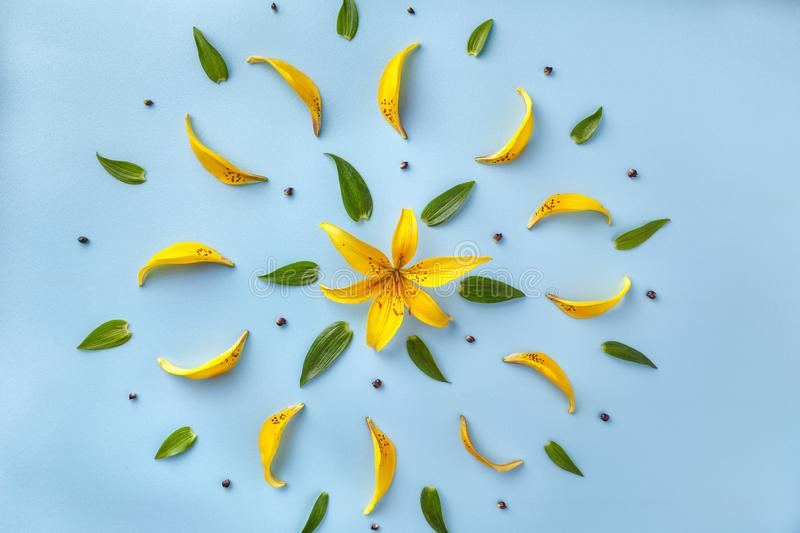 Floral pattern of yellow petals of lilies and green leaves. Flower background on a light blue paper, flat lay. Nature backdrop, in the form of the sun stock photography