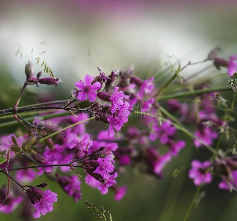 Floral pink-white-green beautiful background. Forest pink flowers on a blurred background. Soft focus. royalty free stock photos