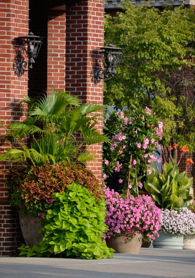 Floral planters with palm, coleus, sweet potato vine, canna lily, mandevilla, and petunia. stock image
