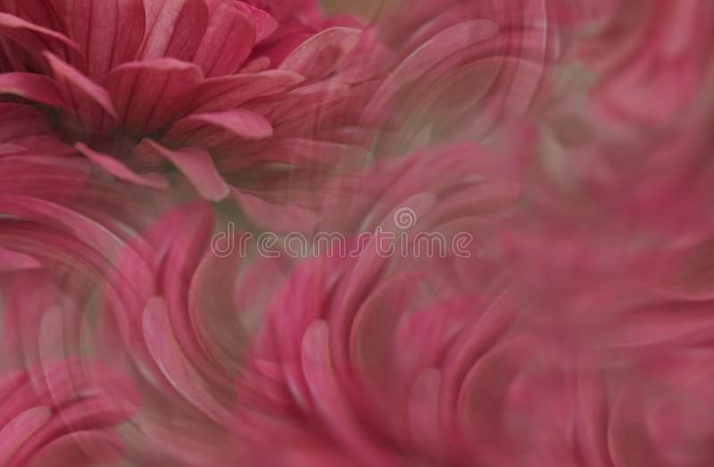 Floral red beautiful background. Flower composition. The petals of flowers around the girl`s face. Greeting card. Nature stock images