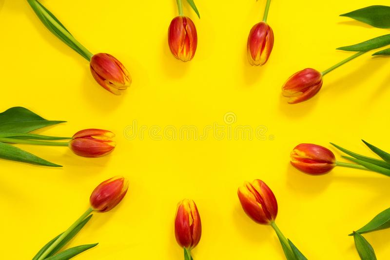 Floral red tulip frame on bright yellow background with copy space in center. Hello spring. Concept of greeting card. celebrating royalty free stock photography