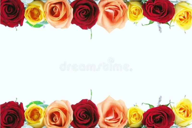 Download Floral rose border stock image. Image of beautiful, arrangement - 3690367
