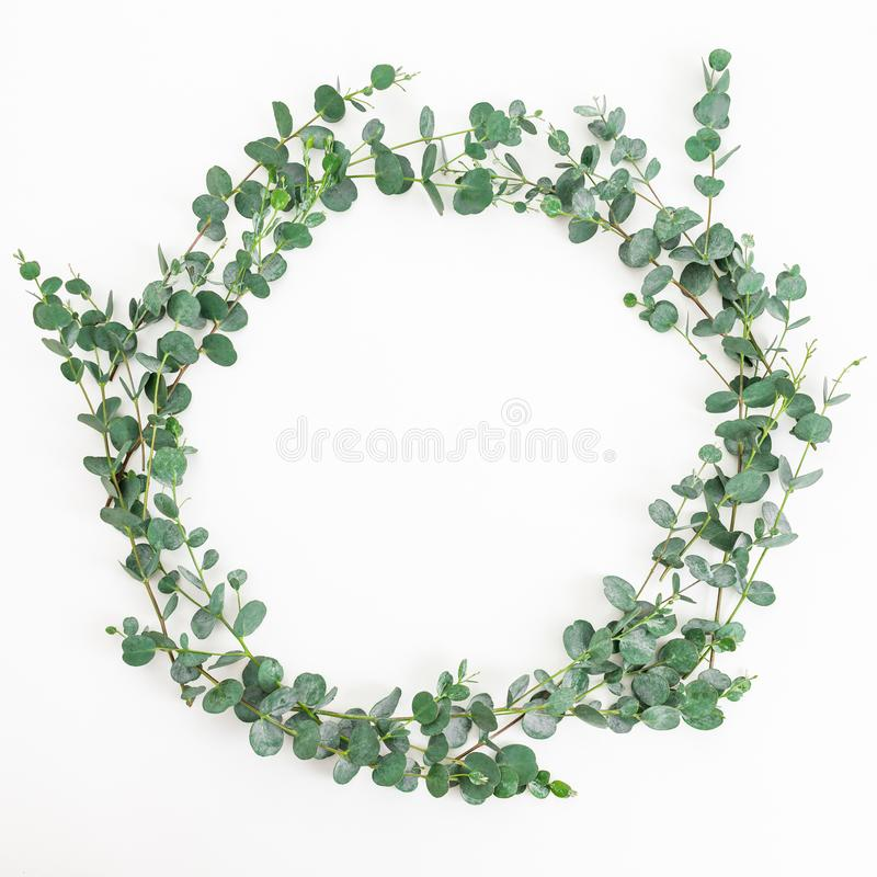 Floral round frame of eucalyptus branches on white background. Flat lay royalty free stock photos