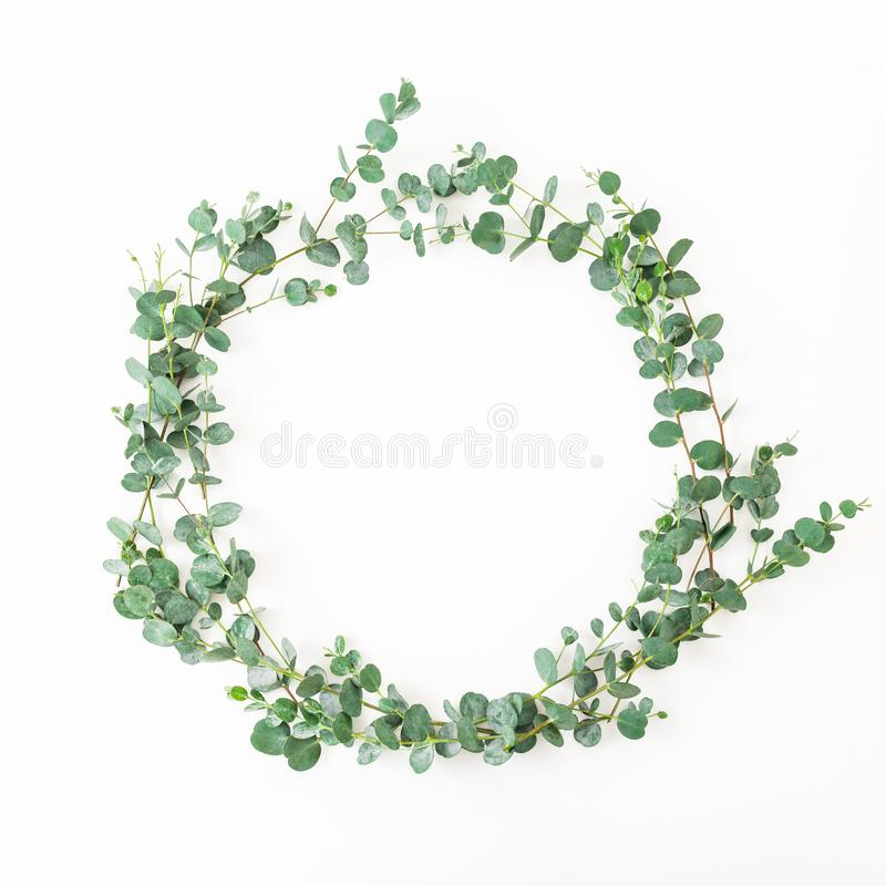 Floral round frame with eucalyptus leaves isolated on white background. Flat lay stock photos