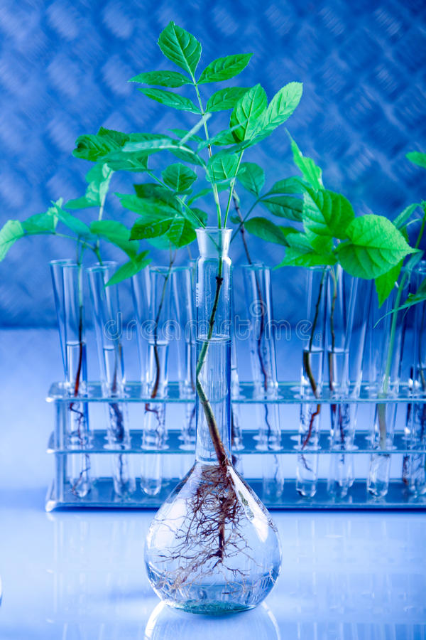 Floral science stock image