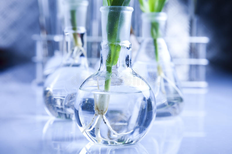 Floral science in blue laboratory stock photos
