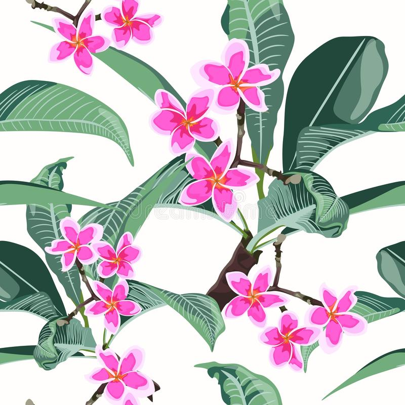 Floral seamless exotic pattern. Tropical pink plumeria branch with leaves on white background. vector illustration