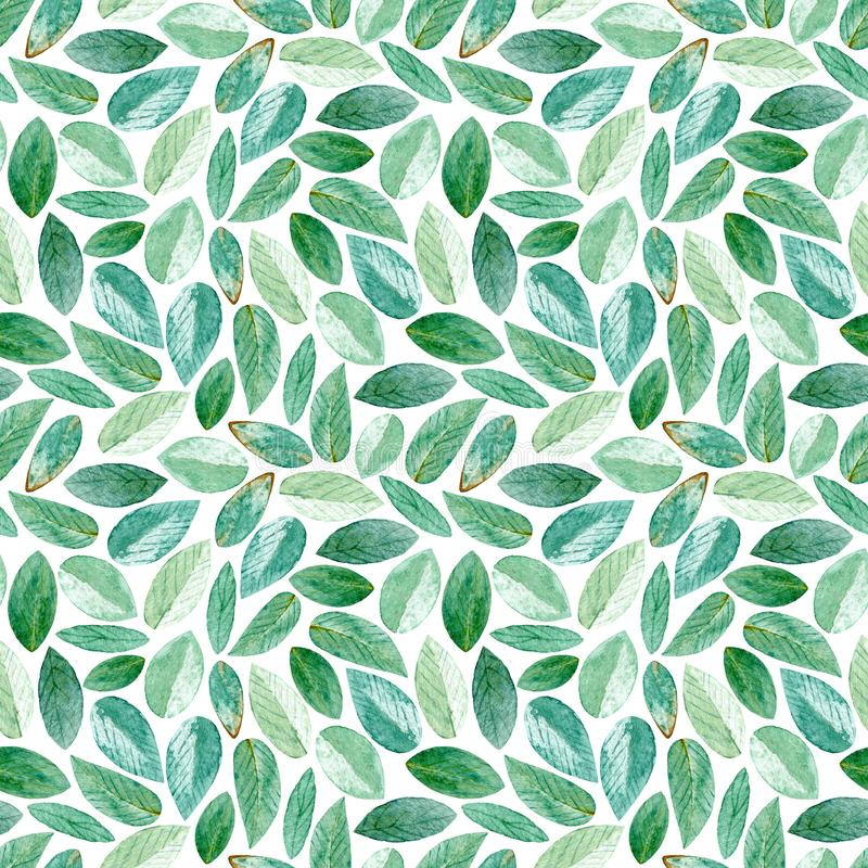 Floral seamless pattern.Eucalyptus branches. Watercolor stock illustration