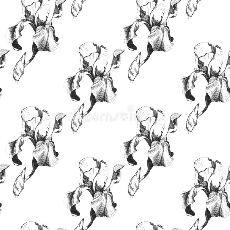 Floral seamless pattern with hand drawn ink iris flowers on white background. Flowers lined up in harmonious geometric. Sequence stock illustration