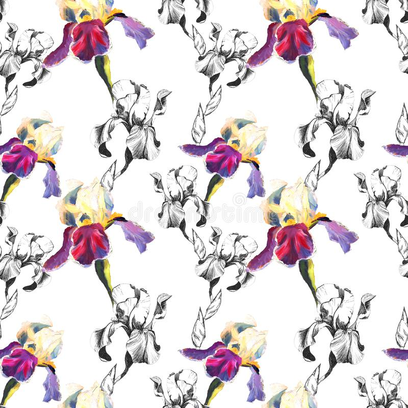 Floral seamless pattern with hand drawn ink and oil iris flowers on white background. Flowers lined up in harmonious. Uninhibited sequence stock illustration