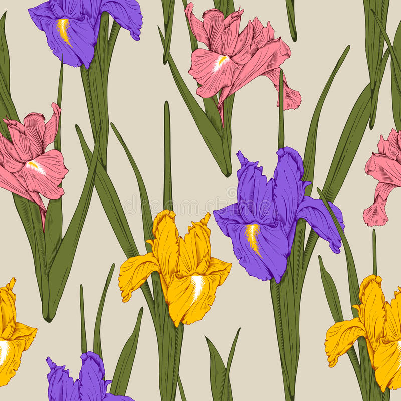 Floral seamless pattern - iris. Retro vintage flower seamless pattern with hand drawn yellow, pink and violet irises. Vector. Easy to edit stock illustration