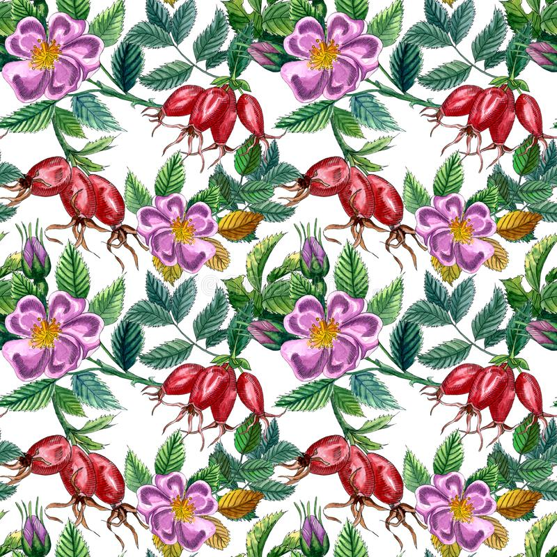 Floral seamless pattern with pink wild rose, rose hip, dog rose, green leaves and red berries, hand drawn watercolor pattern royalty free illustration