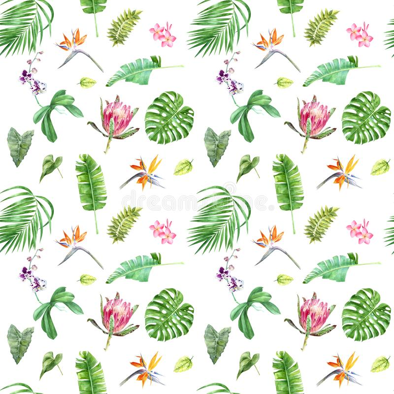 Floral seamless tropical pattern with exotic flowers and leaves stock illustration