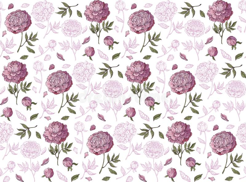 Floral seamless vector background. Pink peonies on white background. Vintage style. Hand-drawn Botanical illustration. Good design. For printing, postcard stock illustration