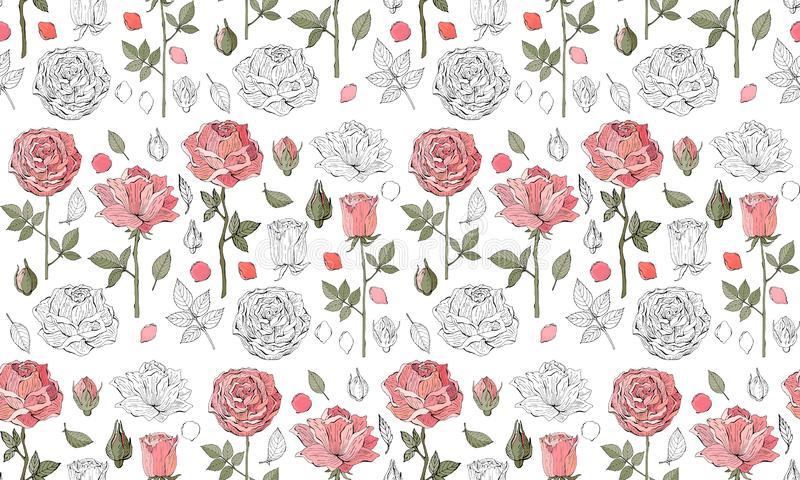 Floral seamless vector background. Pink roses on white background. Vintage style. Hand-drawn Botanical illustration. Good design. For printing, postcard royalty free illustration