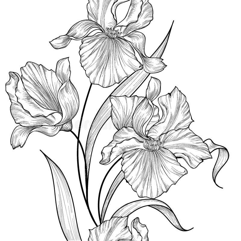 Floral seamless vertical decorative border. Flower iris etching vector illustration