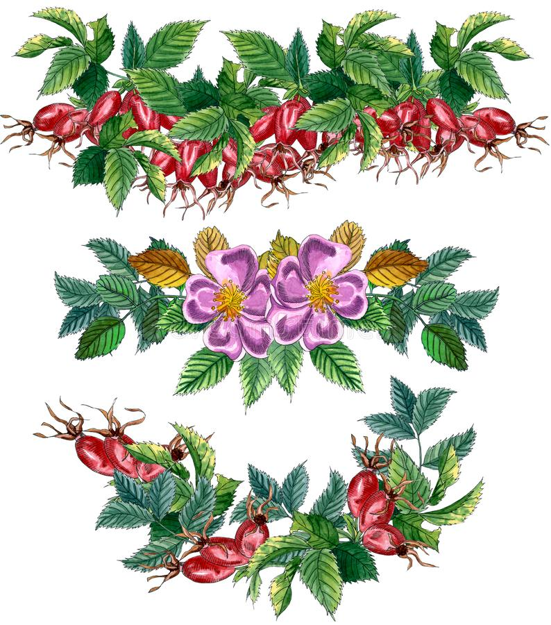 Floral Set of  borders  with pink wild rose, rose hip, dog rose, green leaves and red berries, hand drawn watercolor illustration stock illustration