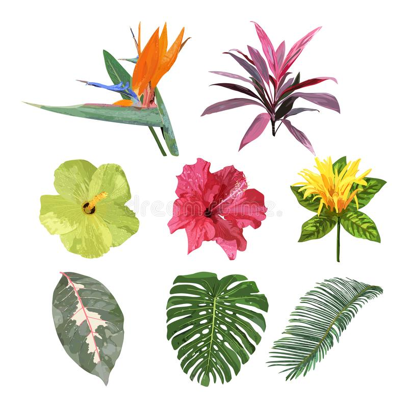 Floral set. Collection with isolated colorful hand drawn tropical flowers and leaves. Vector stock illustration