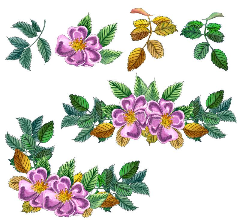 Floral Set of Square Frame, border  with pink wild rose, rose hip, dog rose, green and yellow leaves., hand drawn watercolor. Illustration. Design for vector illustration