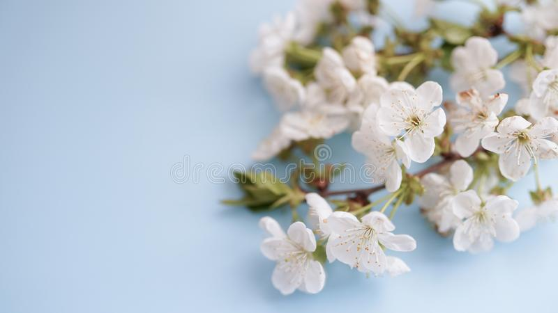 Floral spring background of nature. For easter and spring greeting cards with copy space stock photography