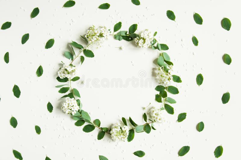 Floral spring background on white. A wreath of greenery. Green leaves and white flowers. Congratulatory background for the holiday royalty free stock image