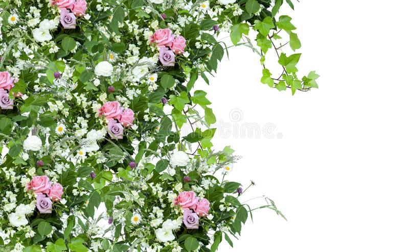 Floral spring decoration with pink roses, green leaves and wild herbs on white background. Floral spring decoration frame with pink roses, green leaves and wild stock photos