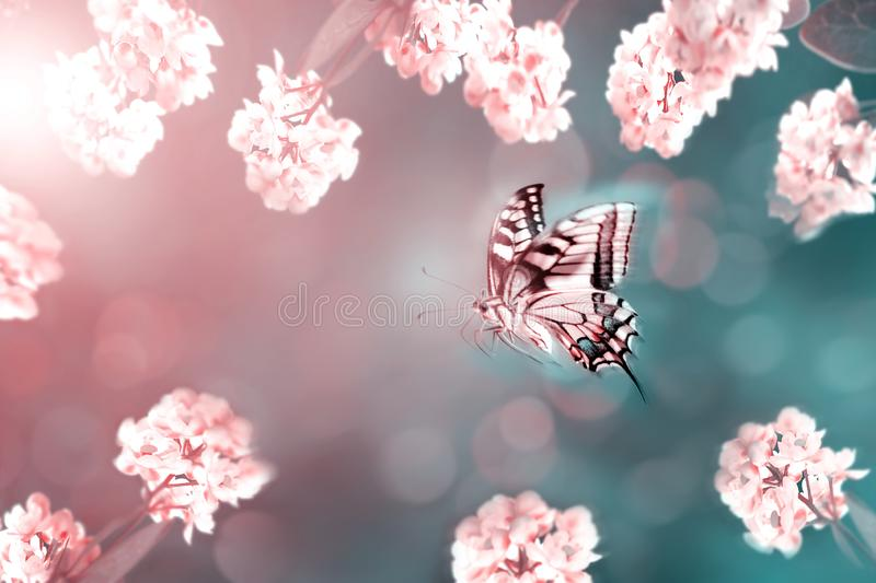 Floral spring and summer background toned in pink and blue.. Beautiful delicate pink flowers and butterfly. royalty free stock photo