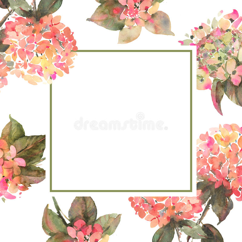 Floral square background template with hydrangeas royalty free illustration
