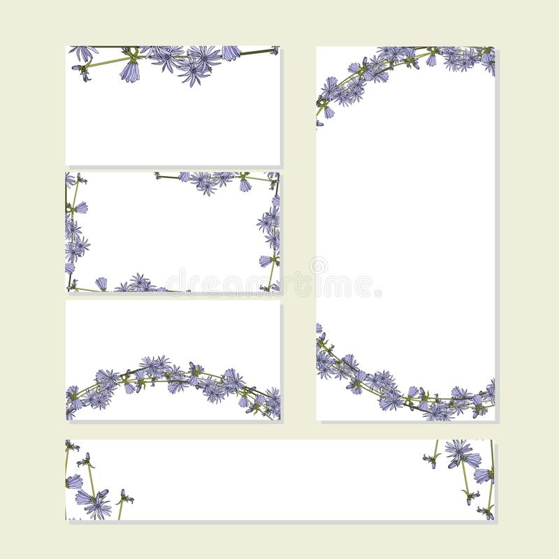 Floral summer set with cute bunches of blue chicory flowers on white. For romantic design, announcements. Floral summer template set with cute bunches of blue royalty free illustration
