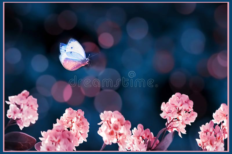 Floral summer and spring gentle background. Beautiful inflorescences of pink flowers and butterfly on a blue background. stock photo