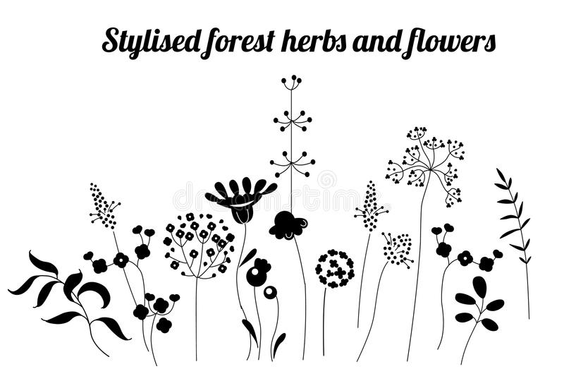 Floral template with stylized herbs and plants. Black and white silhouette. vector illustration
