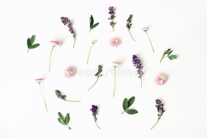Floral, teste padrão, composição botânica Margarida cor-de-rosa e flores roxas da alfafa isoladas no fundo branco da tabela denom imagens de stock royalty free