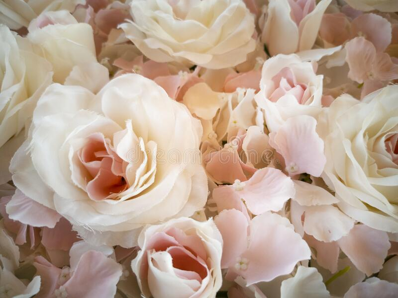 Floral  texture background of white roses and petals royalty free stock image