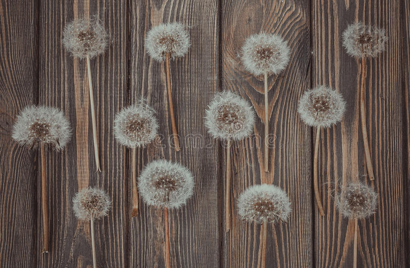 Floral texture in rustic style. Dandelions and wood stock images