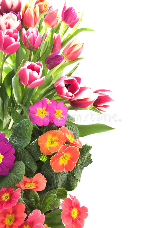 Floral tulip and primrose border royalty free stock images