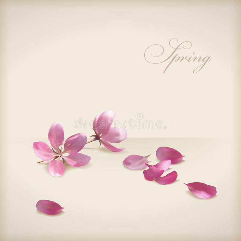 Floral vector cherry blossom flowers spring design royalty free illustration
