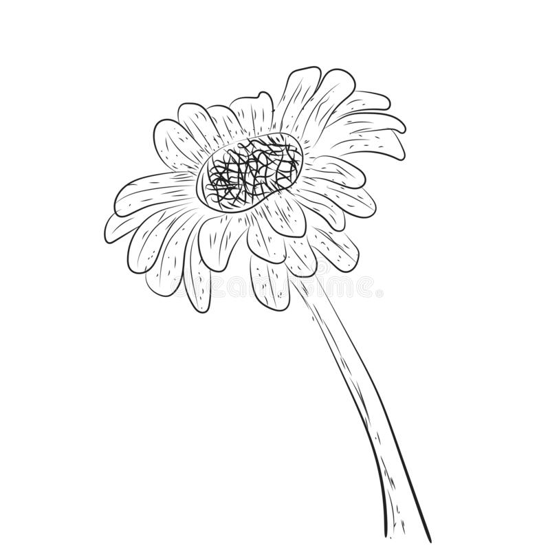 Floral vector spring card composition design tropical flowers leaves, leaf illustration background wedding birthday , valentine royalty free stock image