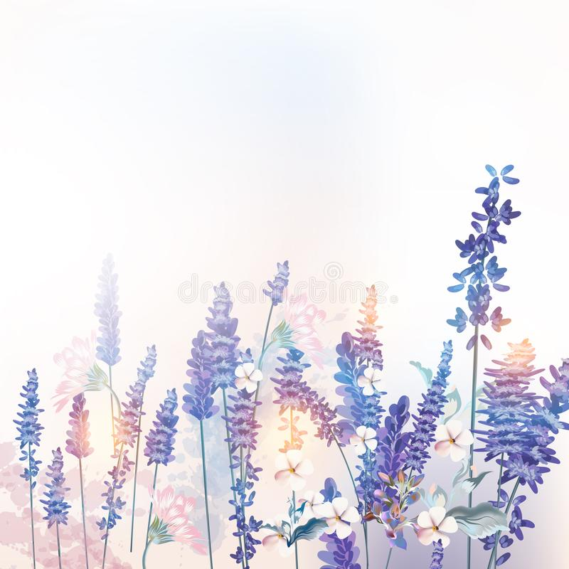 Floral vector spring illustration with field flowers lavender, morning light. Floral vector  spring illustration with field flowers lavender, morning light vector illustration