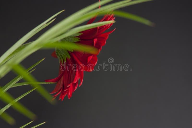Floral vermelho abstrato fotografia de stock