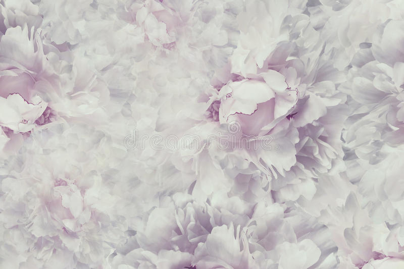 Floral vintage beautiful background. Wallpapers of flowers light pink-white peony. Flower composition. Close-up. stock illustration